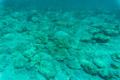 Onderwaterdiescène met koraalrif en vissen in ondiep water, Rode Overzees, Egypte wordt gefotografeerd Stock Afbeelding