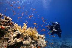 Onderwaterfotograaf in blauw water met kleurrijke vissen Stock Foto