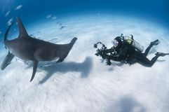 Onderwaterfotograaf face to face met Grote Hammerhead-Haai in Duidelijke Wateren van de Bahamas royalty-vrije stock fotografie