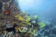 Onderwaterinstallaties, koralen, kleurrijke schepselen in Australië stock afbeelding