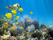 Onderwaterkoraalrif met school van vissen Stock Foto