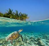 Onderwaterkoraalrif met tropisch eiland Stock Foto