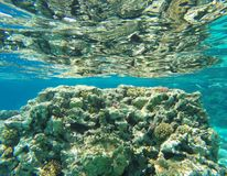 Onderwaterkoraalrifachtergrond stock afbeeldingen
