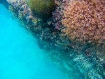 Onderwaterlandschap met koraalmuur en diep blauw zeewater Mariene installaties op onderwatersteen Koralen op klip stock fotografie