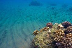 Onderwaterlandschap met zand en koraalrif Blauw schoon water van tropische overzees Stock Foto