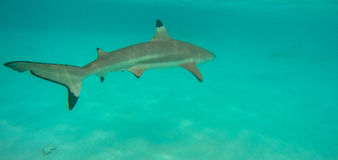 Onderwaterlandschap in Polynesia Stock Afbeelding