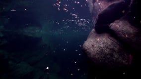 Onderwaterlandschap van rivier Verzasca op achtergrond van reusachtige vlotte stenen stock footage