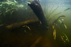 Onderwatermening van de rivierbodem stock fotografie