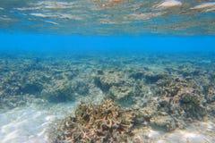 Onderwatermening van dode koraalriffen en mooie vissen snorkeling stock afbeelding