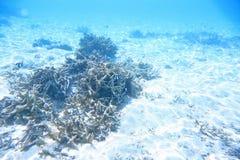 Onderwatermening van dode koraalriffen en mooie vissen snorkeling stock foto's