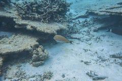 Onderwatermening van dode koraalriffen en mooie vissen snorkeling royalty-vrije stock afbeelding