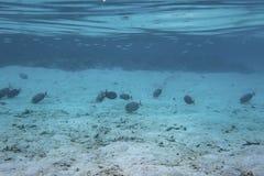 Onderwatermening van dode koraalriffen en mooie vissen snorkeling stock fotografie