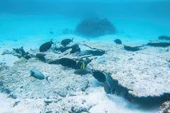 Onderwatermening van dode koraalriffen en mooie vissen snorkeling royalty-vrije stock fotografie