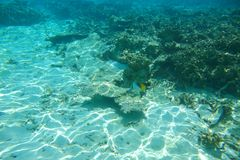 Onderwatermening van dode koraalriffen en mooie vissen snorkeling De Maldiven, royalty-vrije stock afbeelding