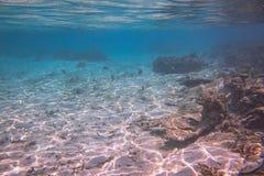 Onderwatermening van dode koraalriffen en mooie vissen snorkeling De Maldiven, royalty-vrije stock foto