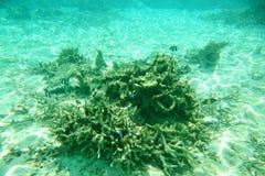Onderwatermening van dode koraalriffen en mooie vissen snorkeling De Maldiven, Indische Oceaan stock afbeeldingen