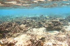 Onderwatermening van dode koraalriffen en mooie vissen snorkeling De Maldiven, Indische Oceaan royalty-vrije stock afbeelding