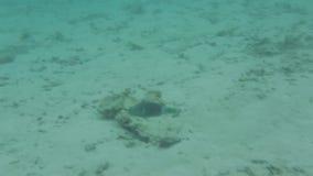 Onderwatermening van dode koraalriffen en mooie vissen snorkeling De Maldiven, Indische Oceaan stock video