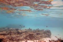 Onderwatermening van dode koraalriffen en mooie vissen snorkeling De Maldiven, Indische Oceaan royalty-vrije stock foto