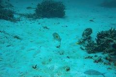 Onderwatermening van dode koraalriffen en mooie vissen snorkeling De Maldiven, stock afbeeldingen