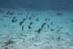 Onderwatermening van dode koraalriffen en mooie vissen snorkeling royalty-vrije stock foto's