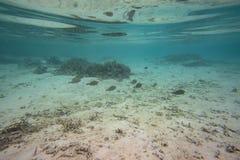 Onderwatermening van dode koraalriffen en mooie vissen snorkeling royalty-vrije stock foto