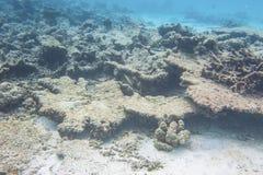 Onderwatermening van dode koraalriffen en mooie vissen snorkeling stock foto
