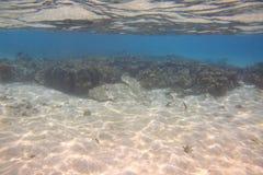 Onderwatermening van dode koraalriffen en mooie vissen snorkeling Indische Oceaan royalty-vrije stock afbeelding