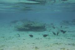 Onderwatermening van dode koraalriffen en mooie vissen snorkeling Indische Oceaan stock fotografie