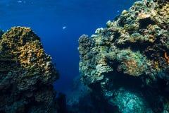 Onderwaterrotsen met koraalrif in oceaan Menjanganeiland, Bali stock foto's