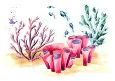 Onderwatersamenstelling met koraal, algen en vissen Waterverfhand getrokken die illustratie, op witte achtergrond wordt geïsoleer stock illustratie