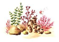 Onderwatersamenstelling met koraal en algen Waterverfhand getrokken die illustratie, op witte achtergrond wordt geïsoleerd royalty-vrije illustratie