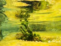 Onderwaterscène stock afbeelding