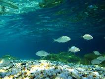Onderwaterscène stock afbeeldingen