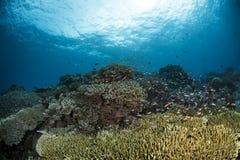 Onderwaterscène met blauwe achtergrond stock afbeelding