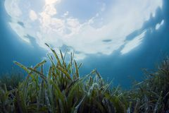 Onderwaterscène met blauwe achtergrond royalty-vrije stock foto's