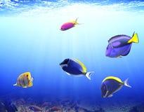 Onderwaterscène met tropische vissen Stock Afbeelding