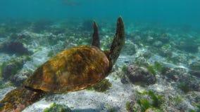 Onderwaterscène met zeeschildpad het zwemmen stock footage