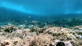 Onderwaterscène - Middellandse Zee ertsader stock footage