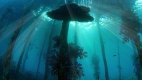 Onderwaterschot van een oude die pier, met zachte koralen, silhouet met zonnestralen wordt overwoekerd stock video