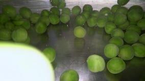 Onderwaterschot van groene erwten die in het water worden gelaten vallen Kokende groenten in metaalpot stock videobeelden