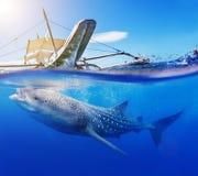 Onderwaterspruit van een walvishaai Stock Afbeeldingen