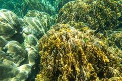 Onderwaterspruit van koraalrif Royalty-vrije Stock Foto's