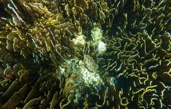 Onderwaterspruit van koraalrif Stock Foto's