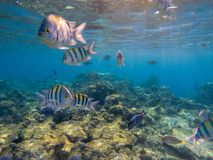 Onderwaterspruit van levendig koraalrif met vissen stock foto's