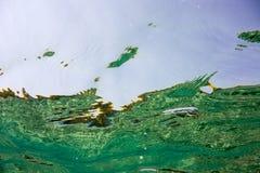 Onderwatertextuur en fauna in Ionische overzees Stock Foto's