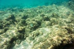 Onderwatertextuur en fauna in Ionische overzees Stock Fotografie