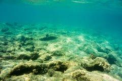 Onderwatertextuur en fauna in Ionische overzees Stock Afbeelding