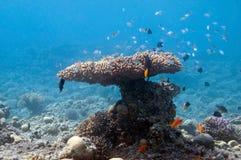In onderwatertuin Stock Foto