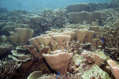 Onderwatertuin Stock Foto
